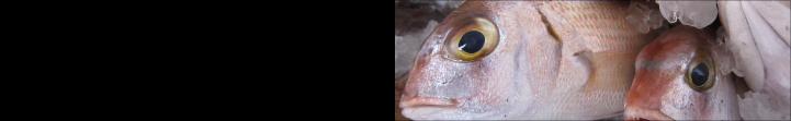 旬の鮮魚カレンダー